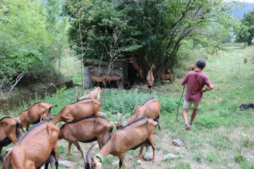 Le fromage de chèvre au détour d'une randonnée !