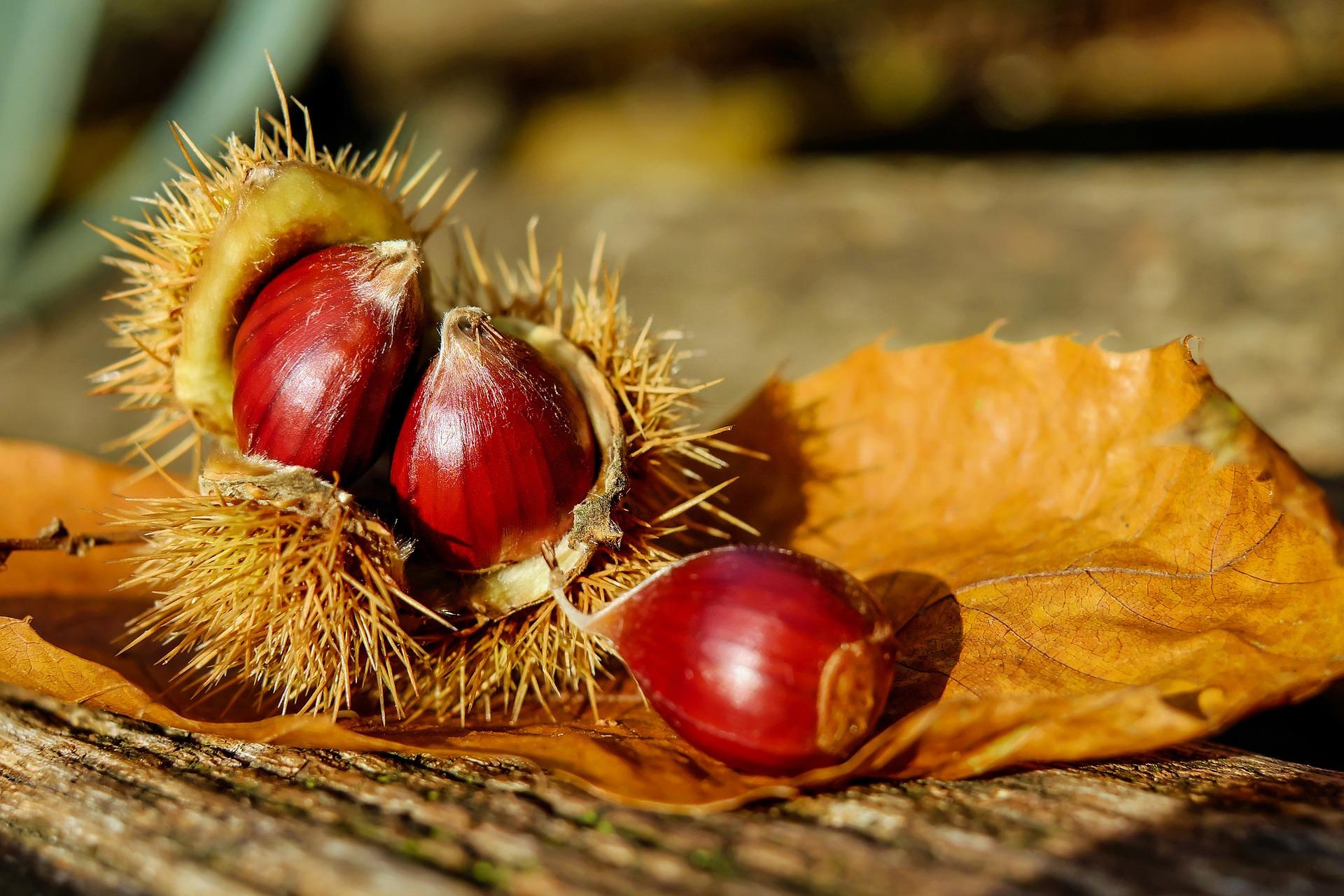 Les Castagnades d'automne